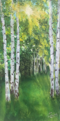 Birch grove on sunny day by Artist Aruna Chagarlamudi (Aruna's Art Studio)